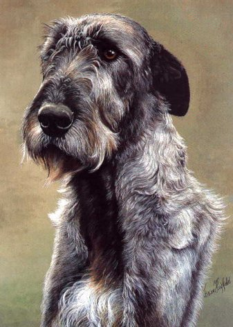 head of wolfhound