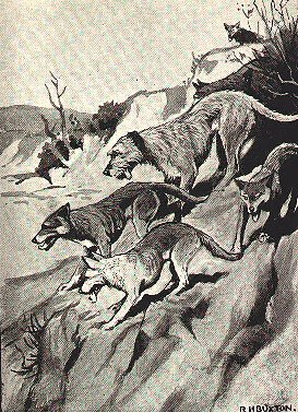 wolfhound & wolves running down hill