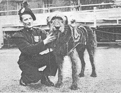 London Irish Rifles mascot