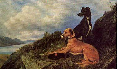 Two hounds on hilltop