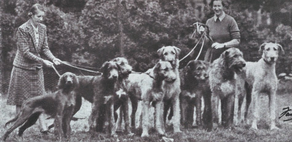 Setter & Wolfhounds