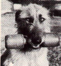 head of wolfhound holding dumbell