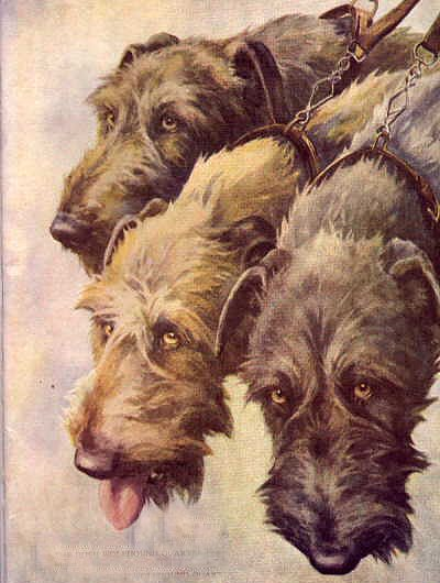 The heads of three hounds