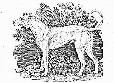 Berwicks Irish Wolf-dog