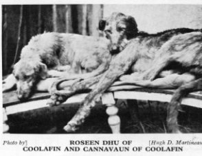pair of Coolafin hounds