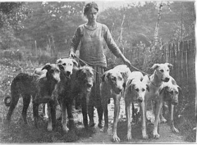 group of hounds