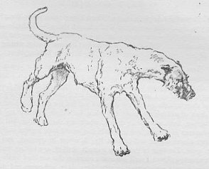 drawing of hound