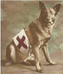 A Red Cross dog