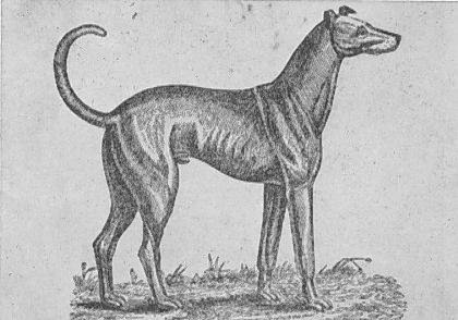 Brown's Irish Greyhound