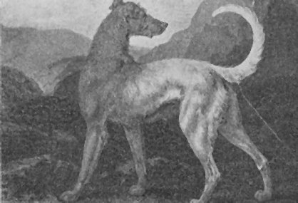 Reinagle's Irish Greyhound