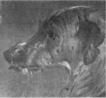 Deerhound by Sir Edwin Landseer
