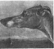 Greyhound by A. Cooper